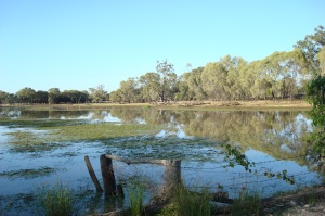 Myall Park: the lagoon